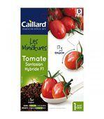 Graines mini Tomates preview1