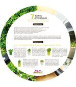 Plateau 7 herbes aromatiques preview3