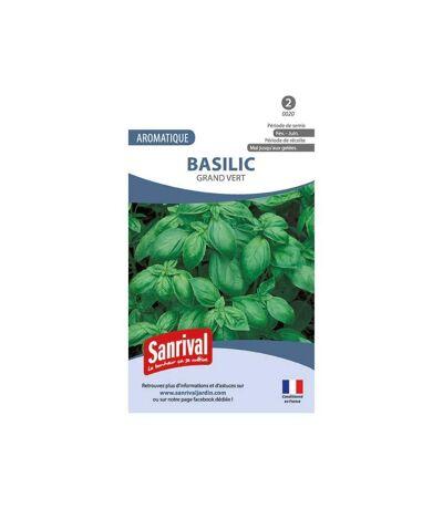 Graines basilic grand vert