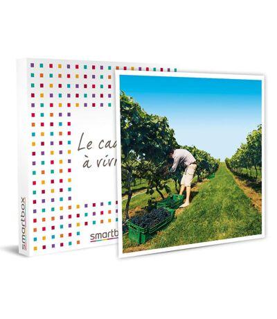 SMARTBOX - À la découverte de nos vignobles - Coffret Cadeau Gastronomie