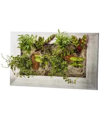 Cadre végétal avec plantes vivantes Wallflower alu brossé M (58 x 37 cm)