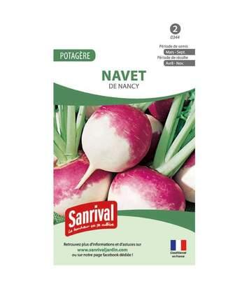 Graines Navet