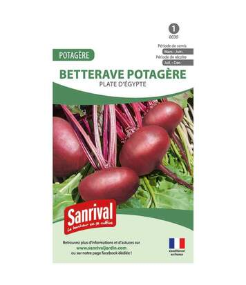 Betterave Rouge Plate d'Egypte