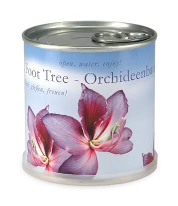 Orchidée à faire pousser en boite