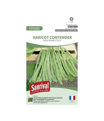 Graines Haricot Contender