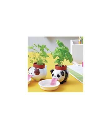 Pot Basilic Peropon Panda