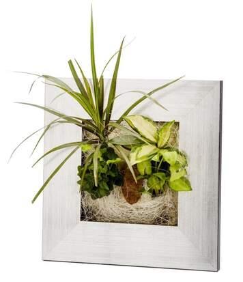 Cadre végétal avec plantes vivantes Wallflower alu brossé S (31 x 31 cm)