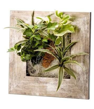 Cadre végétal avec plantes vivantes Wallflower métal vieilli S (31 x 31 cm)