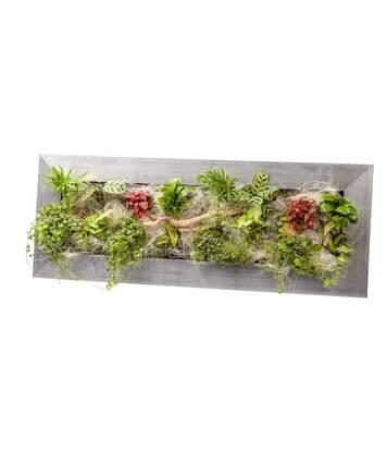 Cadre végétal avec plantes vivantes Wallflower alu brossé L (90 x 37 cm)