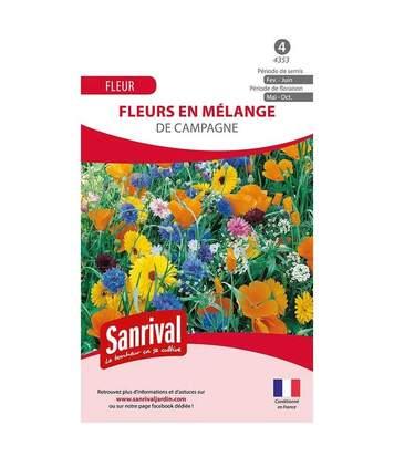 Mélange fleurs des campagnes