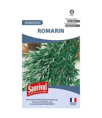 Graines romarin